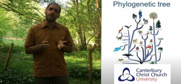 Back Garden Phylogenetics