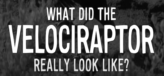 What did the velociraptor really look like?