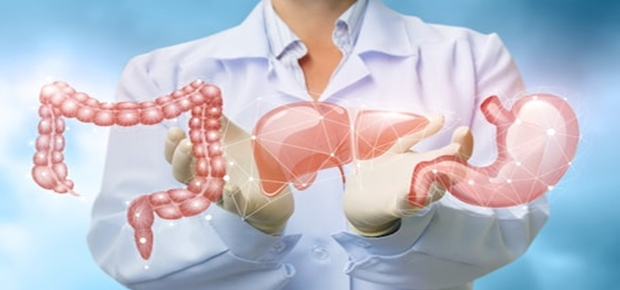 Understanding the Roles of Digestion