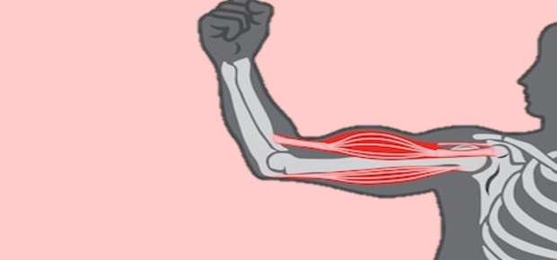 Muscles for Movement
